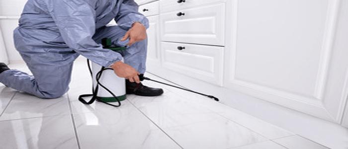 Efficient Ants Control Services Rosebery
