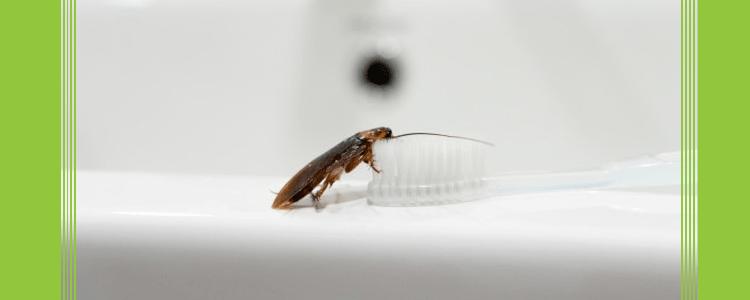 Cockroach Control Rosebery