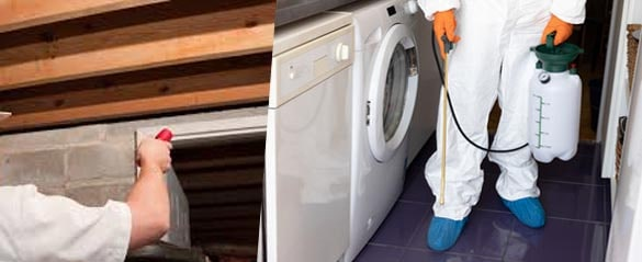 Commercial Pest Control Rosebery