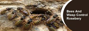 Bees And Wasp Control Rosebery
